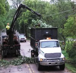 Tree Service in Wisconsin